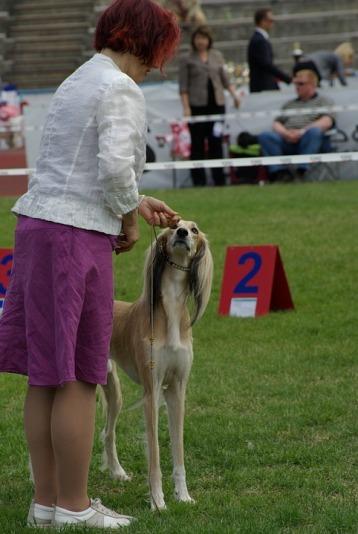 dog-show-732292_960_720