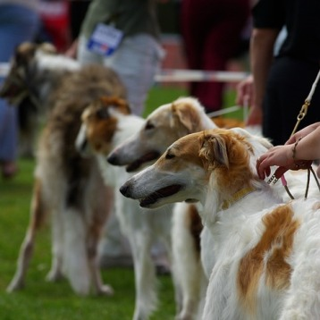 dogs-733639_960_720